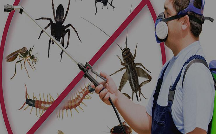 pest control Brisbane